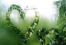 黄山的美是很难用成语来形容的_四字词语